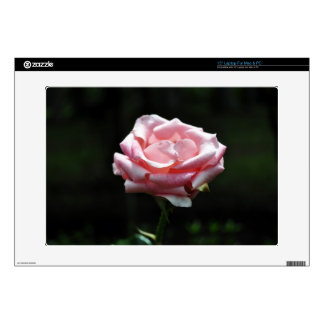 Beautiful Pink Rose Close-up Decals For Laptops
