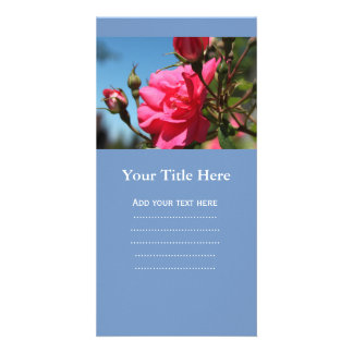 beautiful pink rose flower and buds blue sky photo card