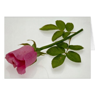Beautiful Pink rose Greeting Card