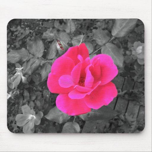 Beautiful Pink Rose Mousepad
