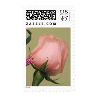 Beautiful Pink Rose Postage Stamp