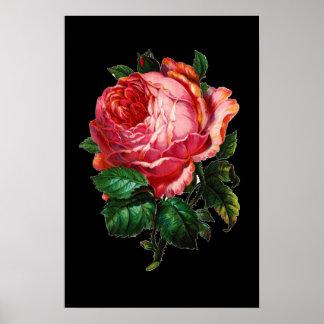 BEAUTIFUL PINK ROSE POSTERS