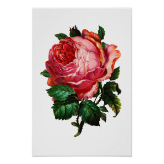 BEAUTIFUL PINK ROSE POSTER