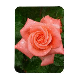 Beautiful pink rose rectangular photo magnet