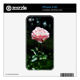 Beautiful Pink Rose Skins For The iPhone 4