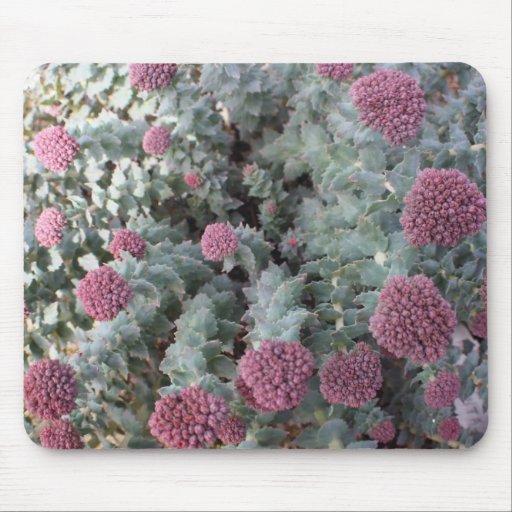 Beautiful Pink Sedum Plant Mouse Pad