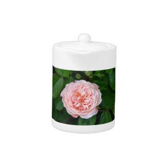 Beautiful pink single rose teapot
