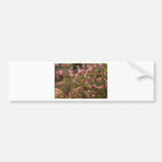 Beautiful Pink Spring Blooming Azaleas Pentanthera Bumper Sticker