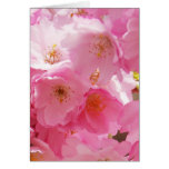 Beautiful Pink Spring Blossoms Greeting Card