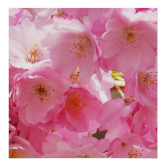 Beautiful Pink Spring Blossoms Poster