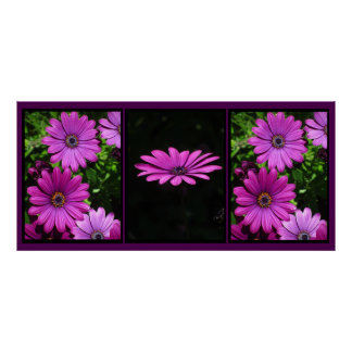 Beautiful Pink Spring Flowers Poster