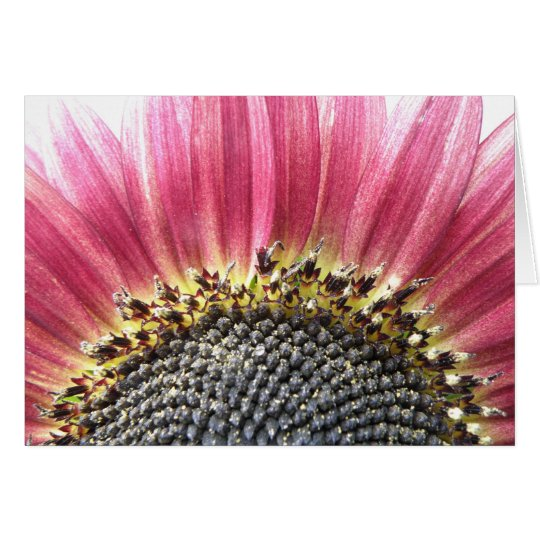 Beautiful Pink Sunflower Greeting Card