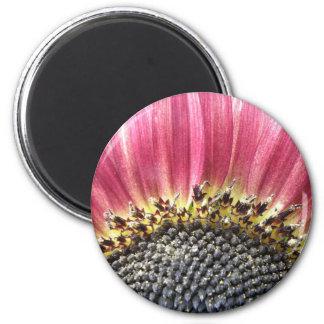Beautiful Pink Sunflower Magnet