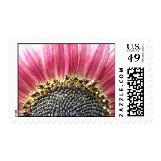 Beautiful Pink Sunflower Postage Stamps