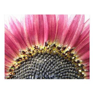 Beautiful Pink Sunflower Postcard