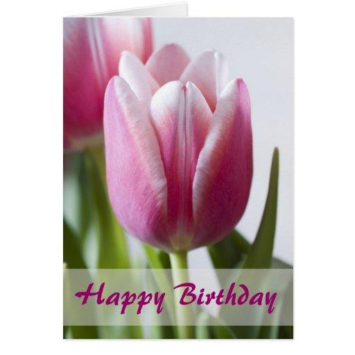 Beautiful Pink Tulip, Happy Birthday Greeting Card