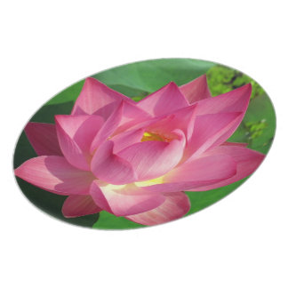Beautiful Pink  Water Lily Floating on a Lake Melamine Plate