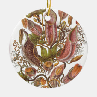 Beautiful pitcher plant drawing by Haeckel Ceramic Ornament