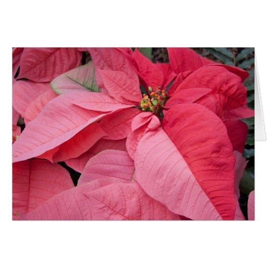 Beautiful Poinsettias Photo Christmas Card