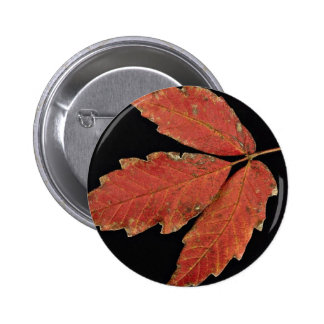 Beautiful Poison Ivy leaves Pinback Buttons