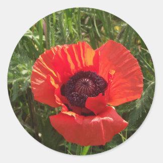 beautiful poppies classic round sticker