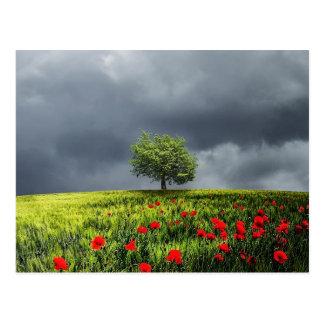 Beautiful poppy flower field tree nature scenery postcard