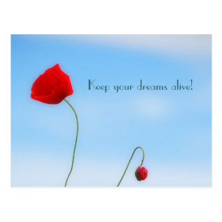 Beautiful Poppy Postcard