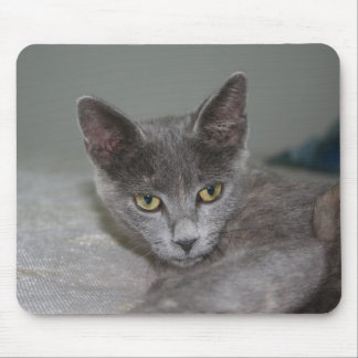 Beautiful Portrait of A Grey Russian Cross Tabby C Mouse Pad