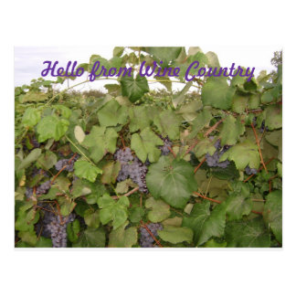 Beautiful Post card of Grapes