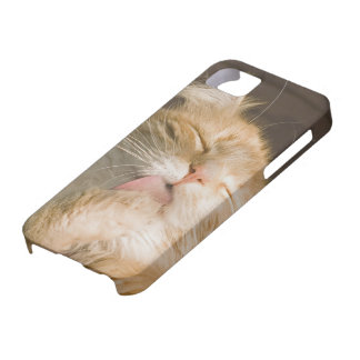 Beautiful Preening Maine Coon Close Up Photograph iPhone SE/5/5s Case