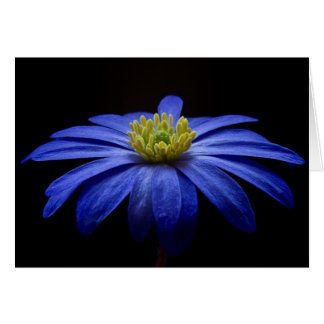 Beautiful Pretty Blue Flower on Black Card