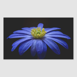Beautiful Pretty Blue Flower on Black Rectangular Sticker