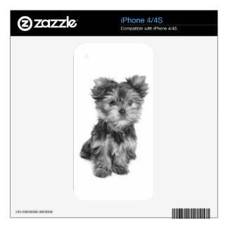 Beautiful puppy iPhone 4 skins