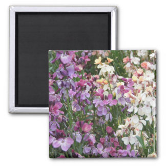 Beautiful Purple and White Floral Magnet