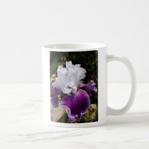 Beautiful Purple And White Iris Design Classic White