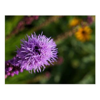 Beautiful Purple Blazing Star Postcard
