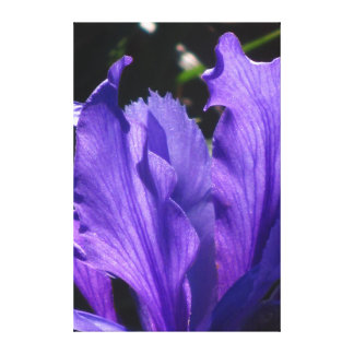Beautiful purple Blue Flower Stretched Canvas Print
