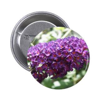 Beautiful Purple Buddleia Flowers Button