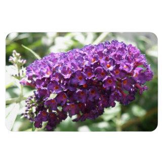 Beautiful Purple Buddleia Flowers Premium Magnet