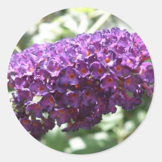 Beautiful Purple Buddleia Flowers Sticker