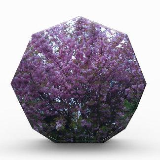 Beautiful purple flowers in Scotland Awards