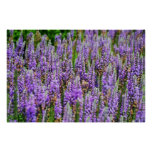 Beautiful Purple Flowers Poster