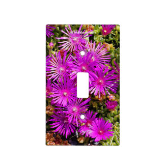 Beautiful Purple Iceplants Light Switch Cover