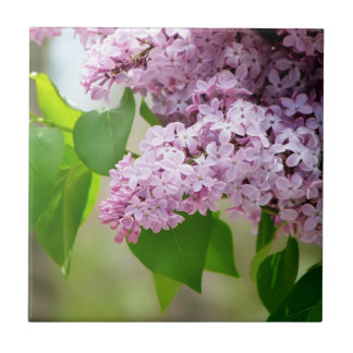 Beautiful Purple Lilacs Small Square Tile