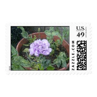 Beautiful Purple Lisiantha Postage
