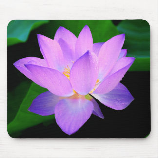 Beautiful purple lotus flower in water mouse pad