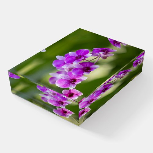 Beautiful Purple Orchid Paperweight