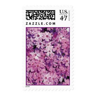 Beautiful Purple Phlox Flower Stamps