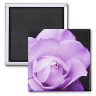 Beautiful purple rose photograph fridge magnet