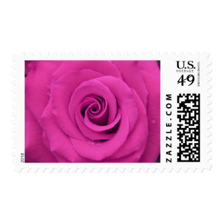 Beautiful purple rose with water drops postage